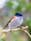 Île de La Réunion, Oiseaux, Faune et paysages