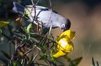 Oiseaux de La Réunion : aperçu en quelques photos