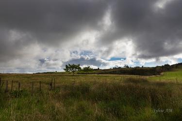 La Plaine des Cafres